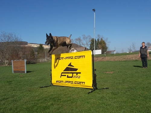 dog training hurdle for IPO