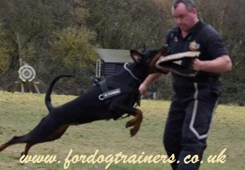 schutzhund training builer