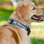 Dog Collar for Service Dogs, K9 Dogs