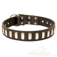 Elegant Dog Collar with Brass Plates