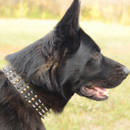 Leather Dog Collar for German Shepherd | GSD Spiked Dog Collar