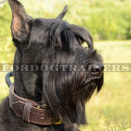Dog Collar with Handle for Riesenschnauzer | Collar with Handle