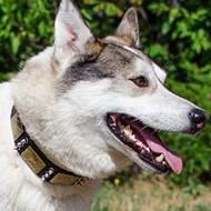 Dog Collar with Studs | Akita Dog Collar Studded Style