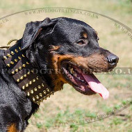 Extra Wide Dog Collars for Rottweiler with Brass Spiked Design