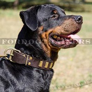 Rottweiler Stylish Dog Collars with Luxury Plated Design
