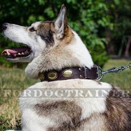 Siberian Husky Collars Vintage Style | Dog Collars with Plates