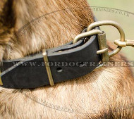 ★Best Dog Collars with Brass Buckle for Malinois★