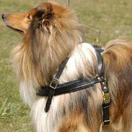 Dog Harness for Tracking | Comfy Dog Harness for Collie