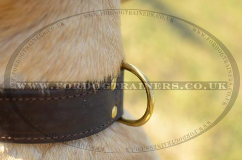 2 ply leather dog collar
