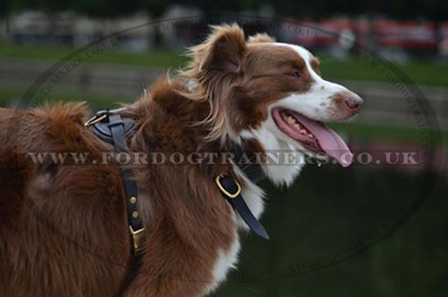 Dog Leather Harness for Shepherd Dog Breeds