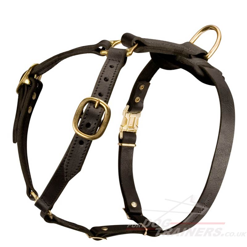 Best Harness To Control Large Dogs
