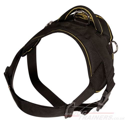 Best dog harness for Labrador