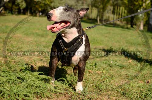 Best Dog Harness for Bullterrier