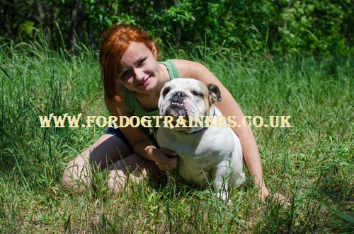 dog breeders uk