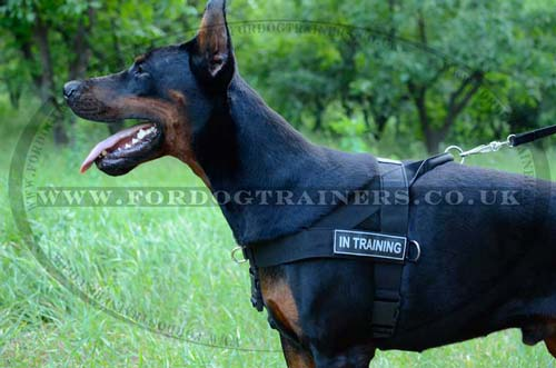 Doberman Dog Harnesses UK