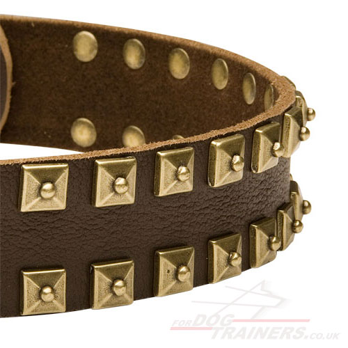 Dog Collars for Large Dogs