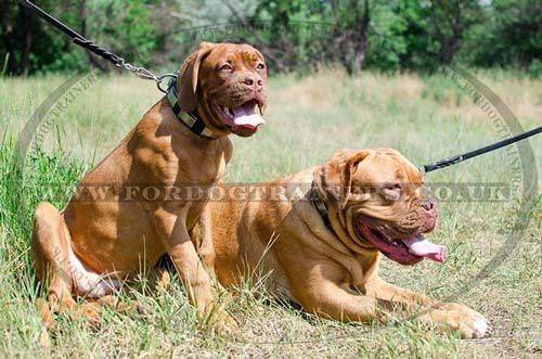 Dogue De Bordeaux dog leashes and collars