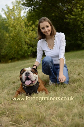 English Bulldog Harness UK Bestseller
