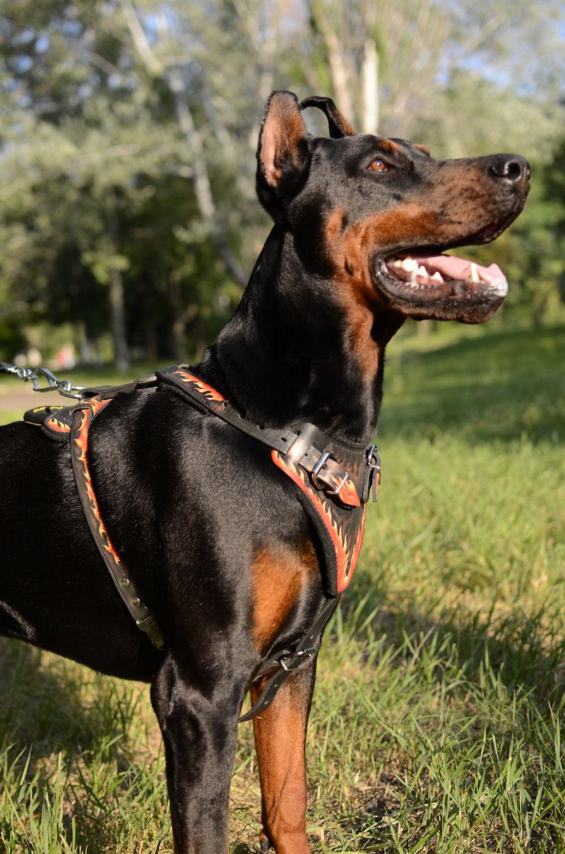 Best New Designer Dog Harness For Large Dog Flame