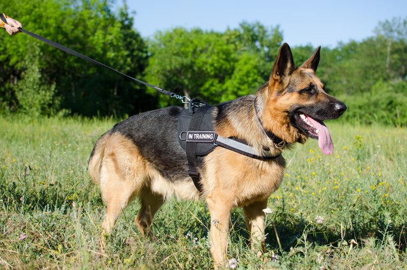 Police Dog Collars Uk