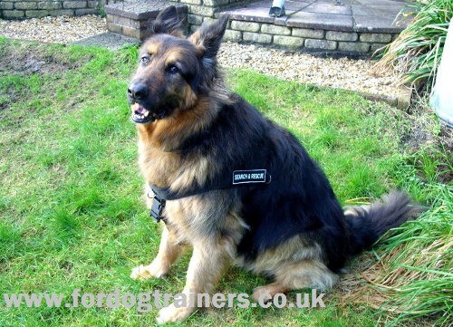 German Shepherd harness UK