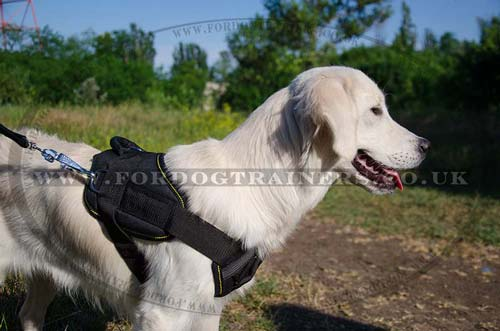 Nylon dog training harness