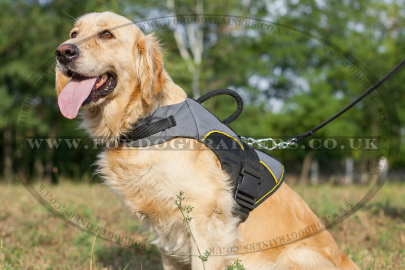 Golden Retriever Jacket Size Golden Retriever Dog Vest 48 90
