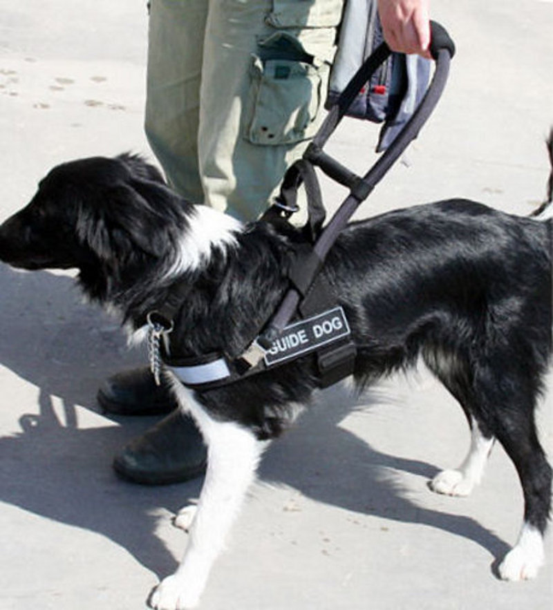 Guide Dog Harness For Sale Uk Service Dog Harness With