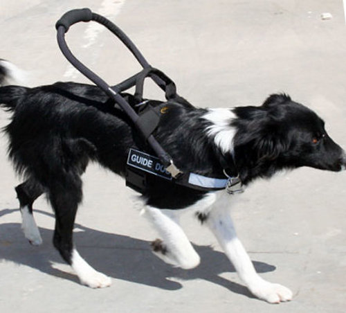 Mobility Assistance Dogs Uk