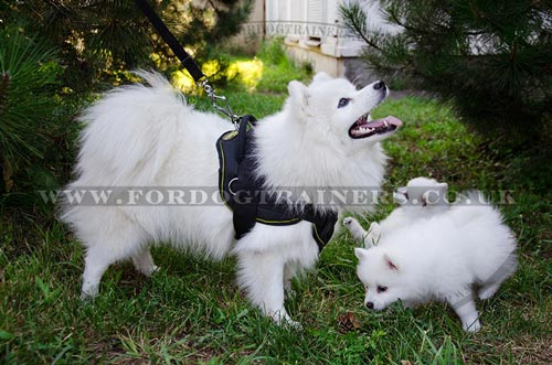 Small Dog Harness for Japanese Spitz for Sale UK
