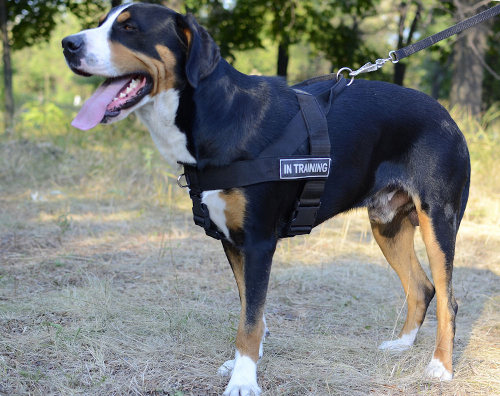 Non Pull Dog Harness K9