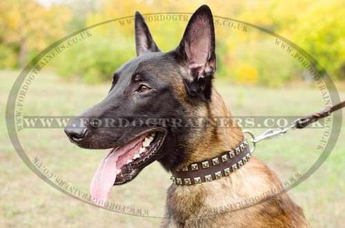 Malinois Dog Leather Collar