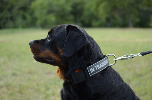 dog harness patches UK