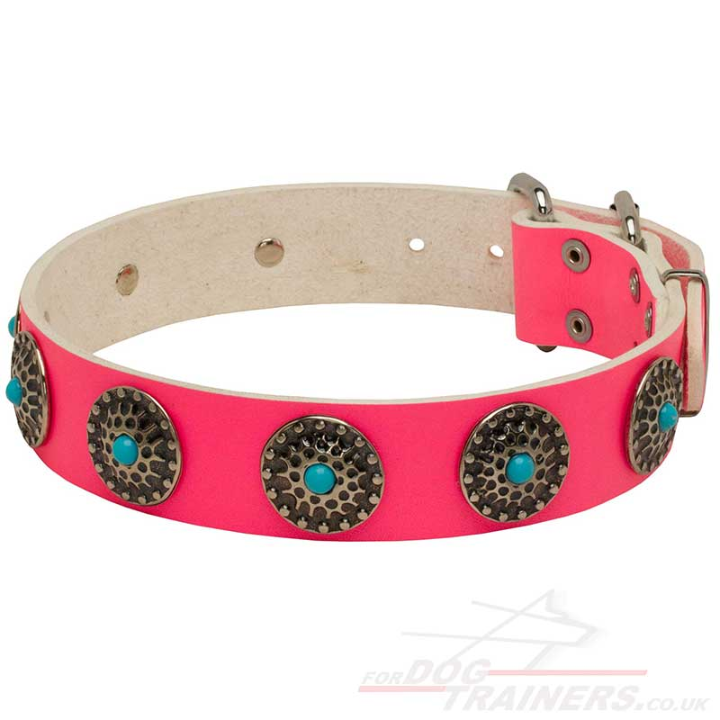 Dog Collars For Big Dogs Uk