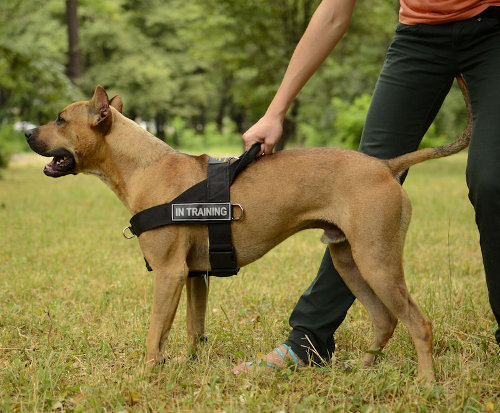 weight pulling harness for dogs