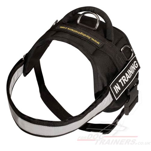 Best Reflective Dog Harness UK