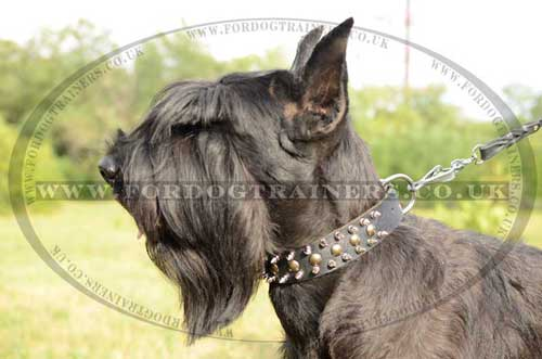 riesenschnauzer dog breed