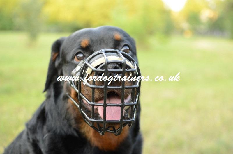 Rottweiler Muzzle. Best Dog ...