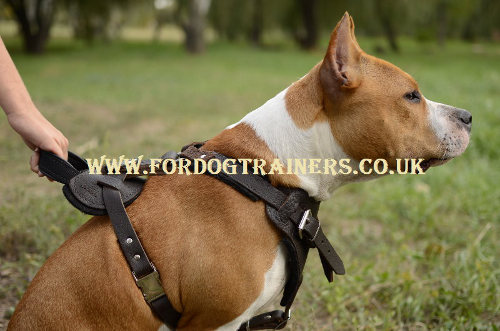 Staffy Harness