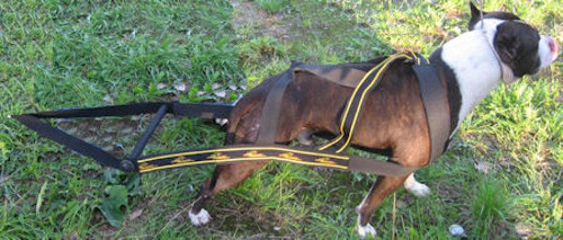 Weight Pulling Dog Harness Uk
