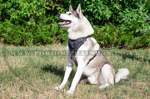 Padded Dog Harness UK Bestseller
