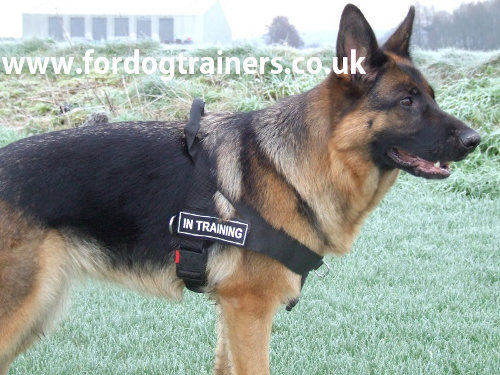 no pull dog harness UK