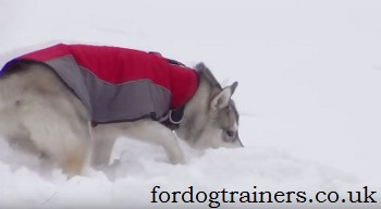 dog exercises in snow
