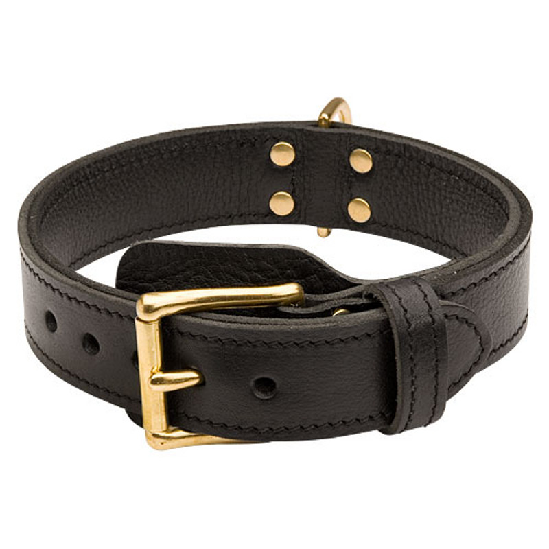 Training Collars For Extra Large Dogs