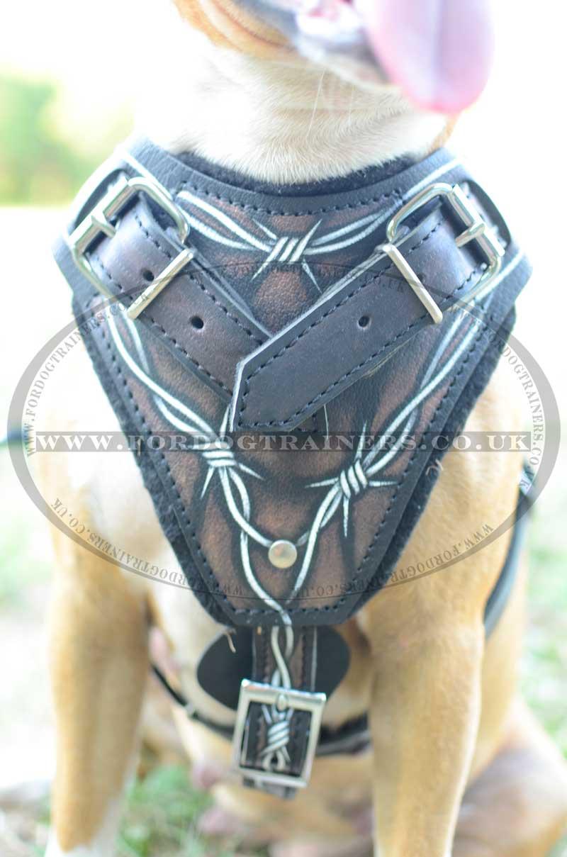 Designer Dog Harness Pit Bulls Uk Best Quality Wire Training