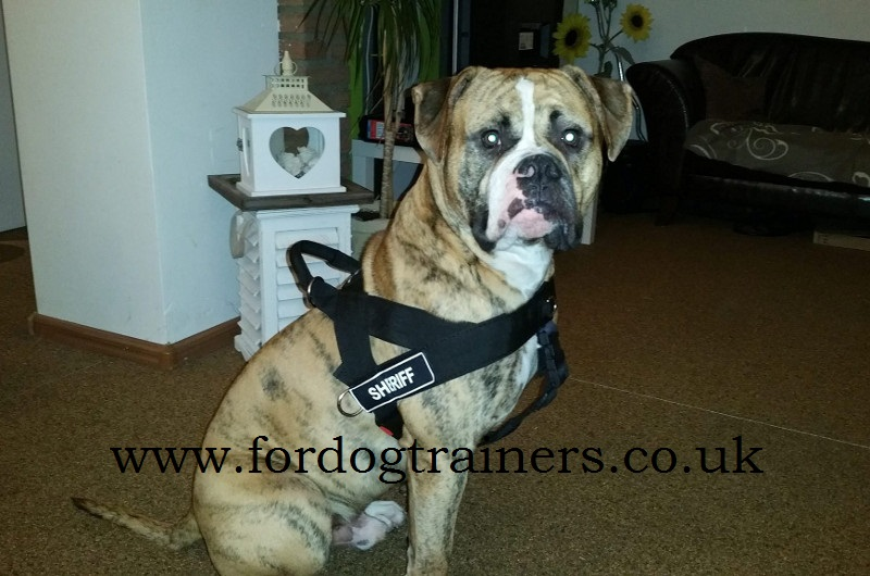 American Bulldog Harness Bestseller UK