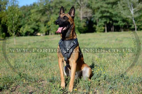 Dog Training Harness for Belgian Malinois<