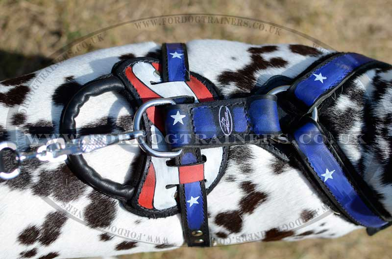 Dog harness for Dalmatian