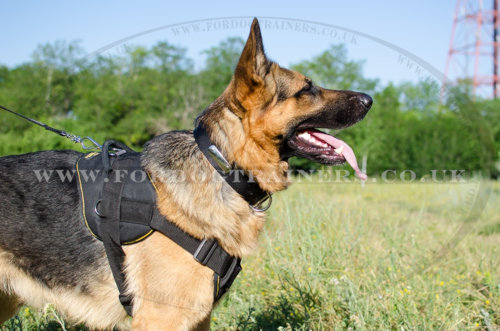 The Best Dog Harness for German Shepherd