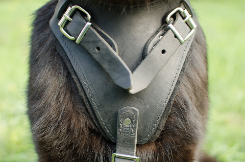 GSD harness UK